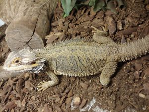 A Reptile Dysfunction Adoption Event - PetSmart #0209 @ PetSmart #0209